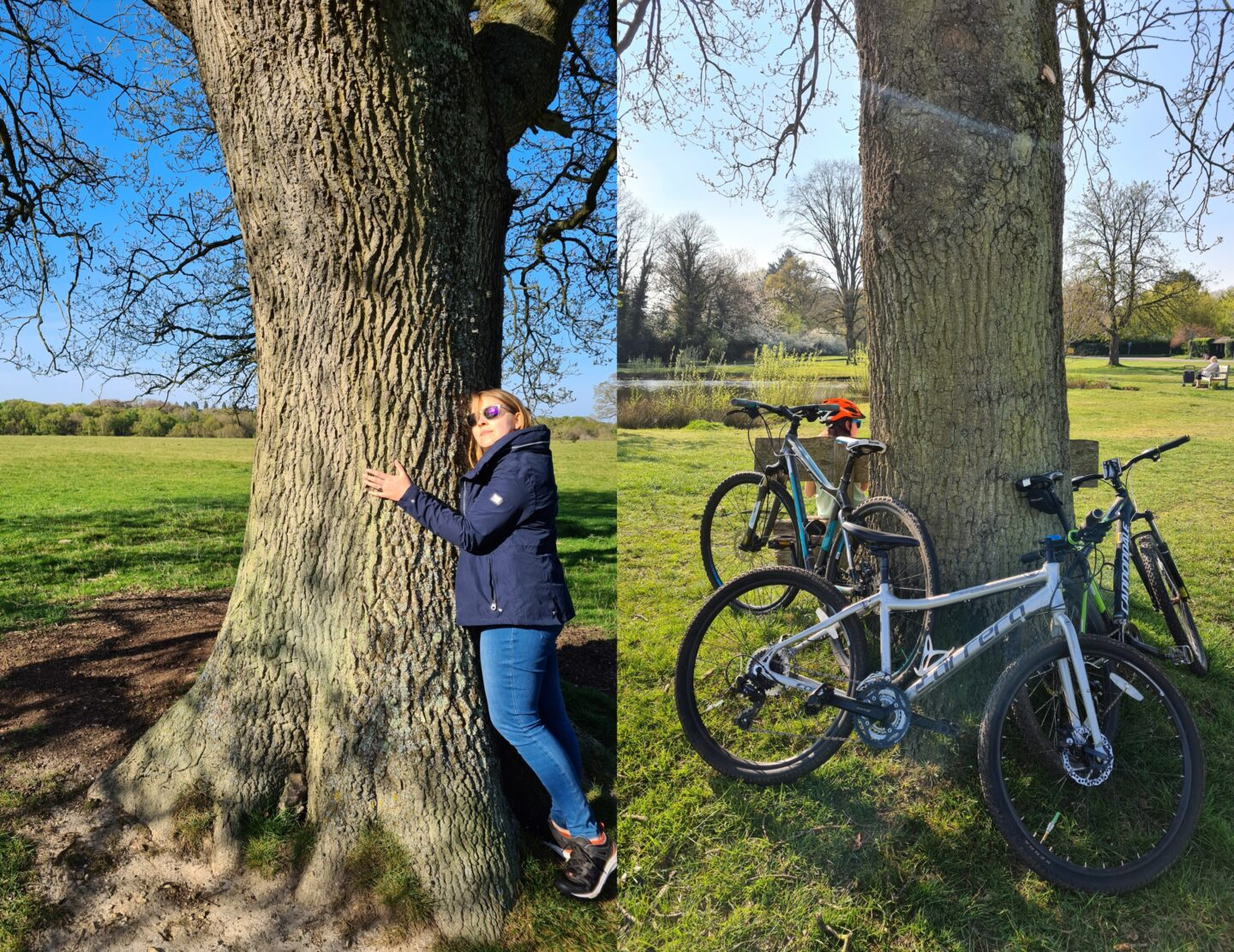 Hugging a tree on left, bikes on right